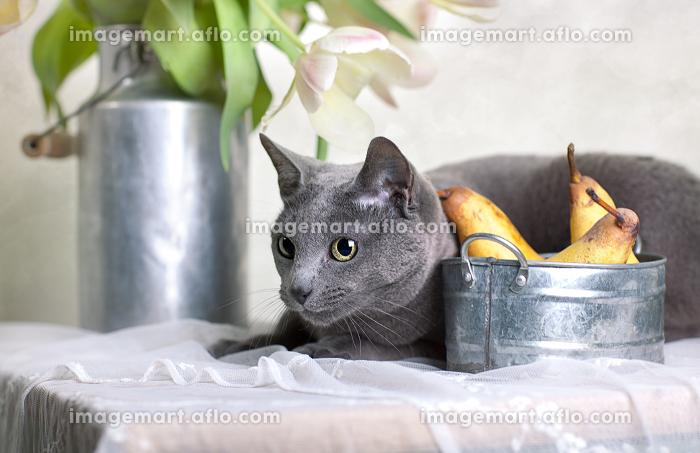 花 リラックス 植物の販売画像