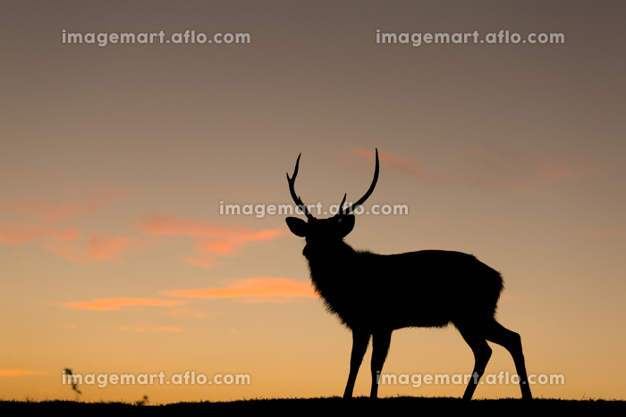 Deer silhuette with a colorful sunsetの販売画像