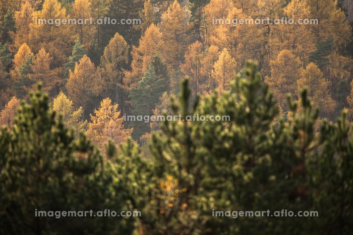 Autumn landscapeの販売画像