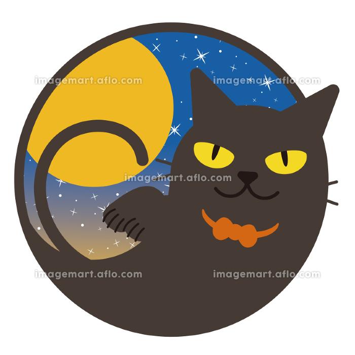 黒猫の販売画像