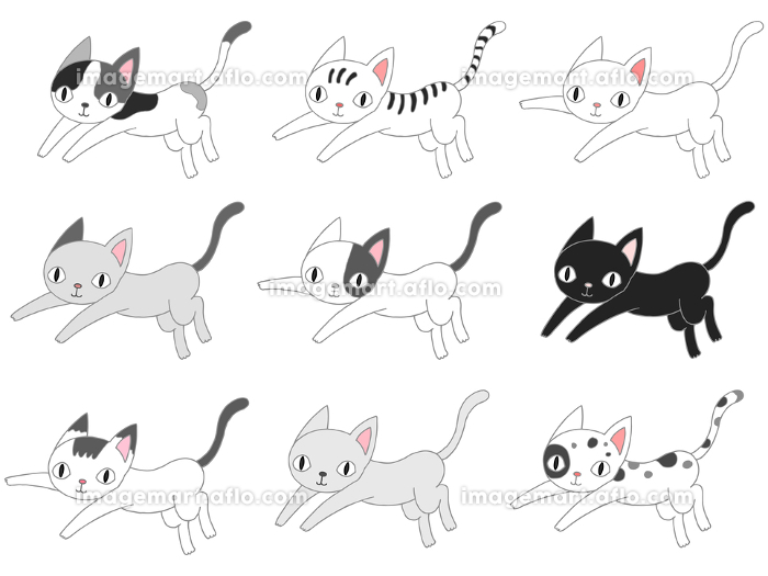猫の販売画像