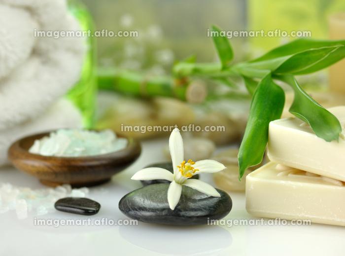 植物 衛生 治療の販売画像