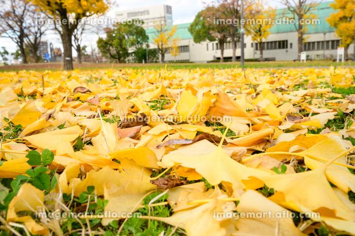 秋の勝山公園の販売画像