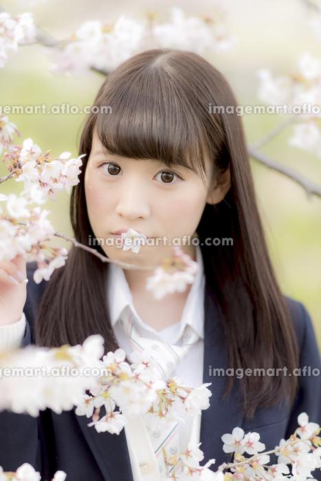 桜の花びらを口にくわえる女子高生