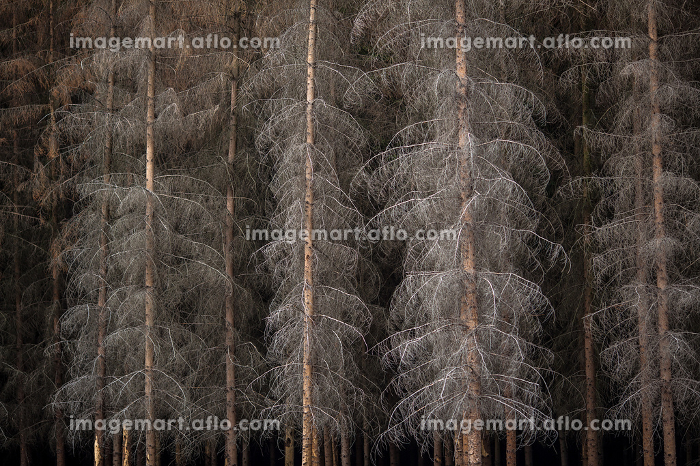 Magic dark forest