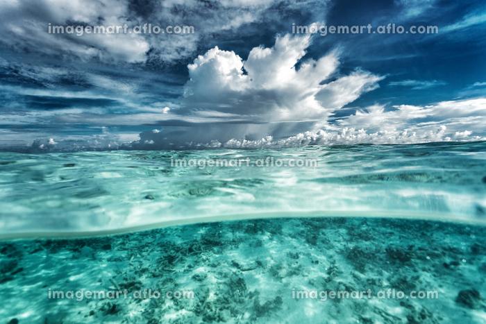 アジア 海洋 クリーンの販売画像