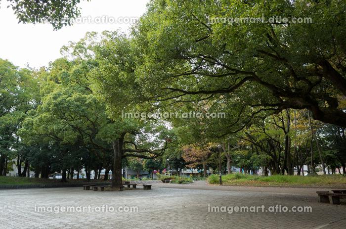 光が丘公園 紅葉の販売画像