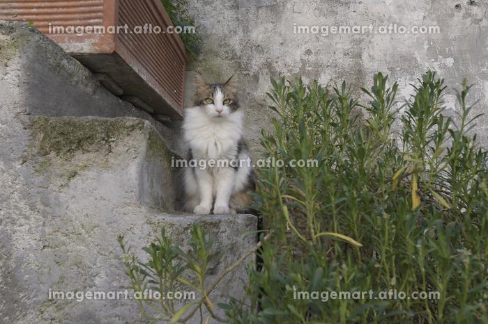 石階段でこちらを見ている猫の販売画像