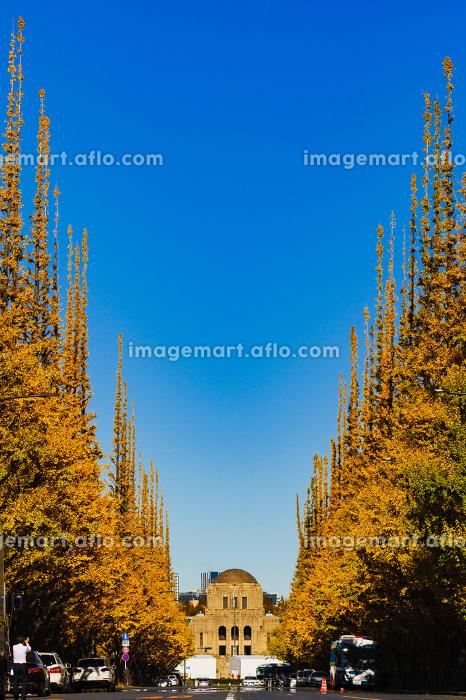 都内の観光名所:秋の神宮のイチョウ並木【東京都】【2019年撮影】の販売画像