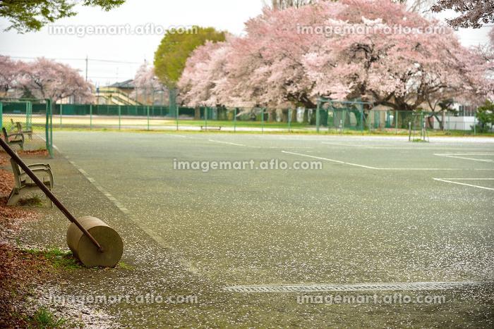 桜のあるテニスコートの販売画像