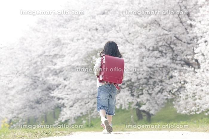 桜堤を歩く女の子の後ろ姿の販売画像