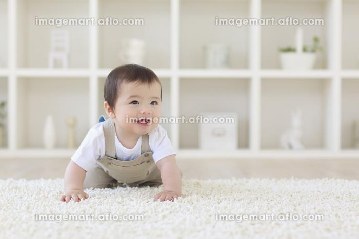 リビングをハイハイするハーフの赤ちゃんの販売画像
