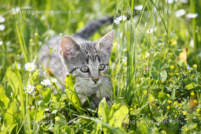 playing cat children on green meadowの販売画像
