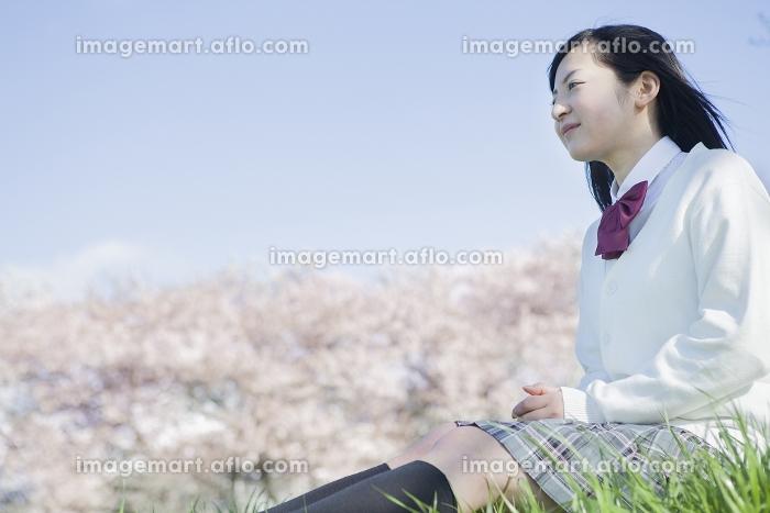 桜をバックに座る高校生