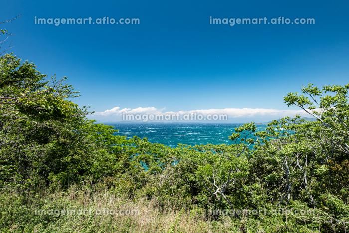 初夏の青空と東京湾の青い海 千葉県大房岬 5月の販売画像