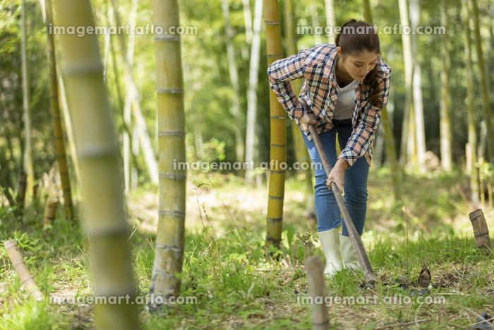 筍を掘る若い女性