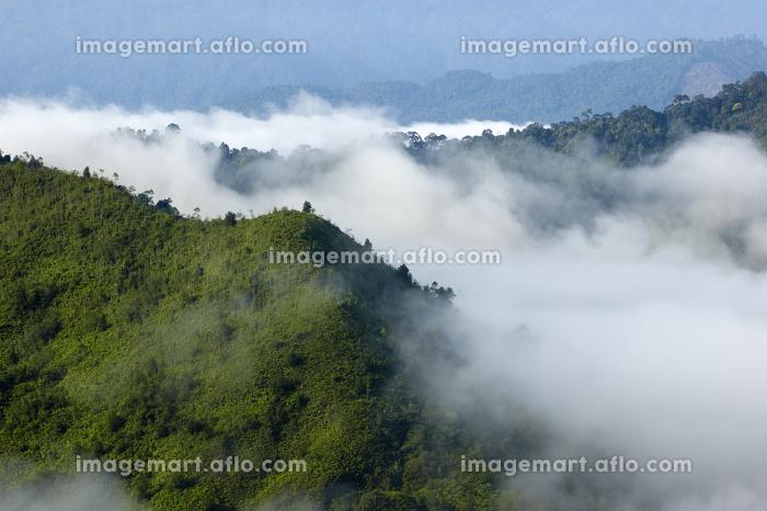 マレーシア 環境 神秘的の販売画像