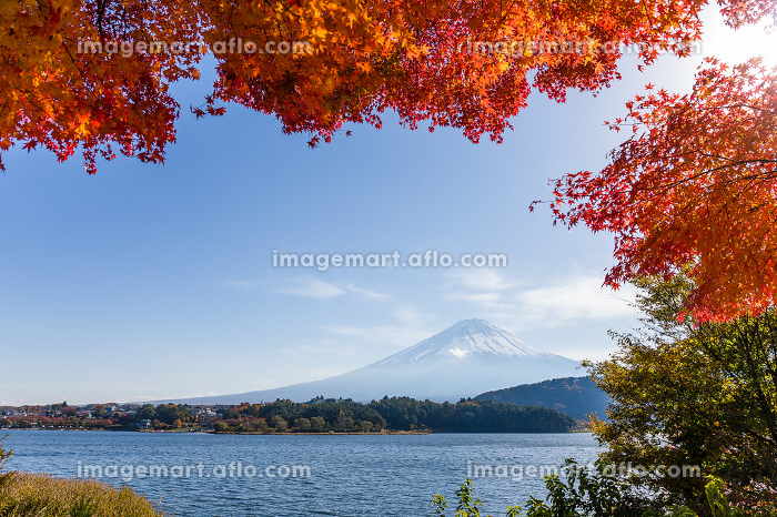 Fuji mountain and maple treeの販売画像