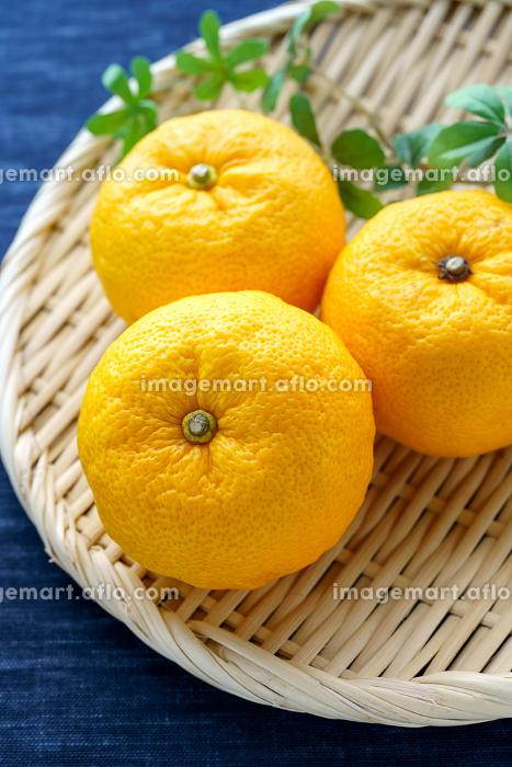 柚子の販売画像