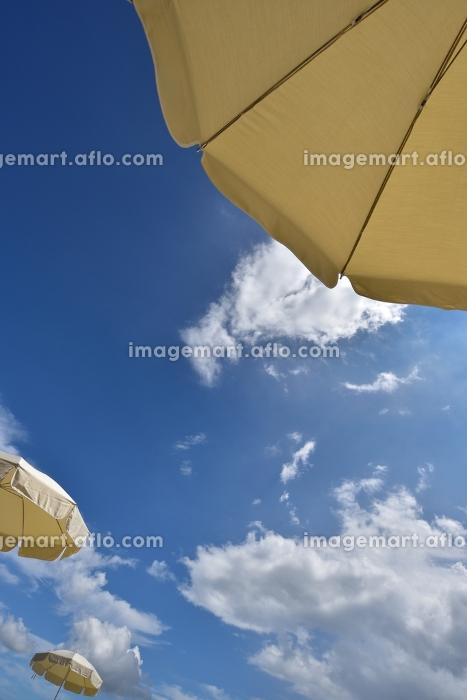 トロピカルリゾート、パラソルの販売画像
