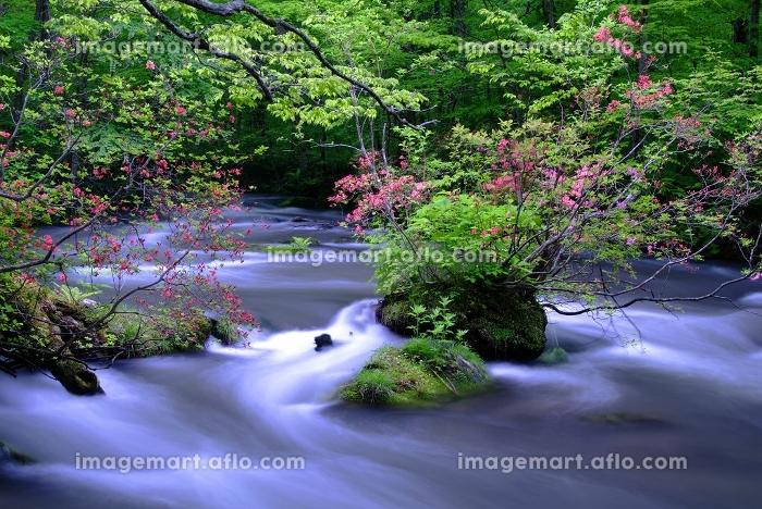 奥入瀬渓流の販売画像