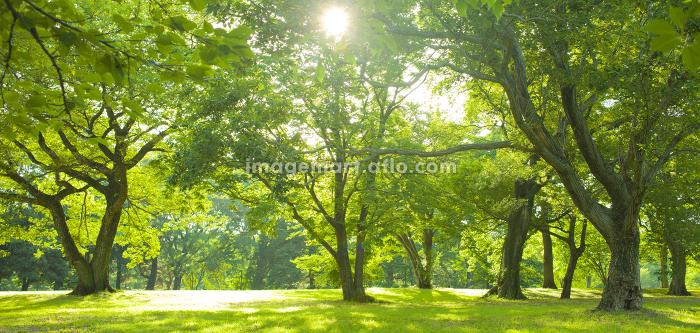 Sunshine Forestの販売画像