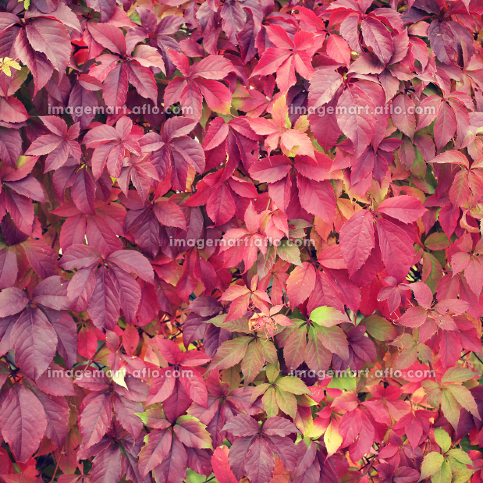 autumn leaves background with a retro vintage instagram filterの販売画像