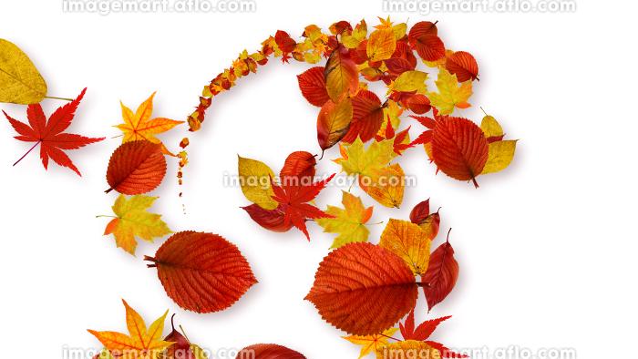 カラフルな紅葉が舞い踊るCGイラストの販売画像