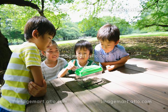 カブトムシを観察する小学生たちの販売画像