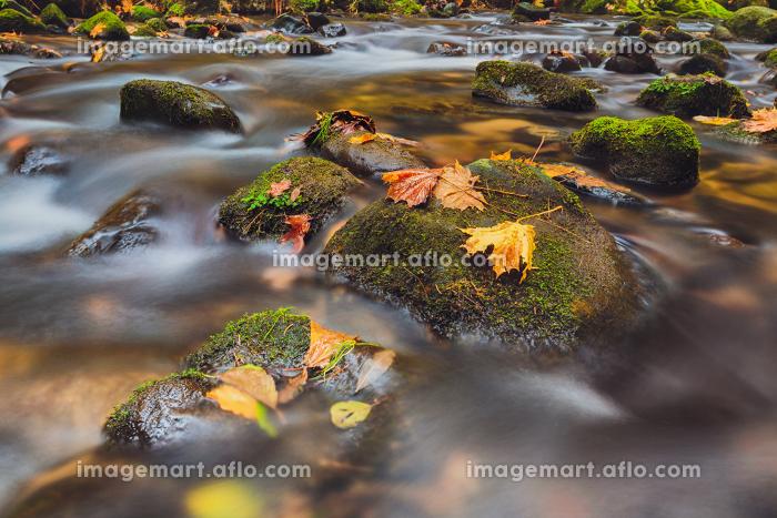river Kamenice in autumn, Bohemian Switzerland. leaves on stones in river Kamenice in autumn with long exposure, Bohemian Switzerland, Czech Republicの販売画像