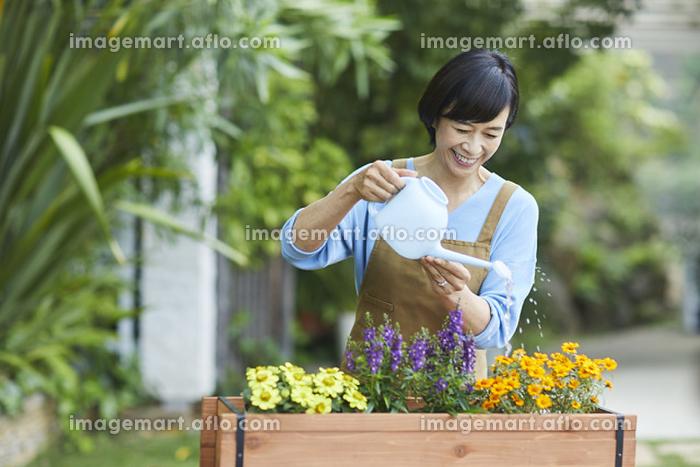 ガーデニングをする中年女性の販売画像