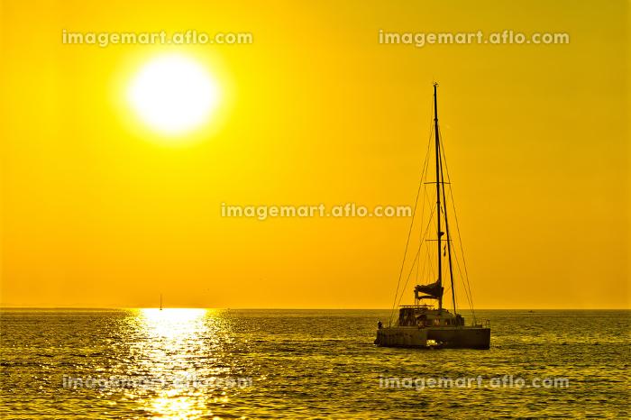 Catamaran sailboat on golden sunsetの販売画像