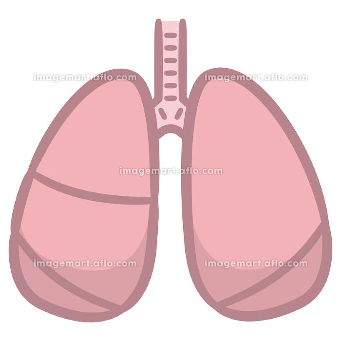 健康な肺の販売画像