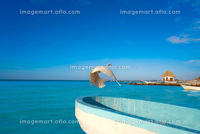 Holbox Island heron bird and boat in the beach Quintana Roo of Mexicoの販売画像