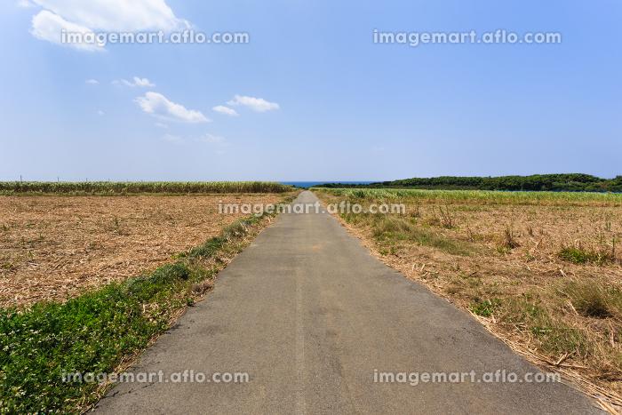 日本最南端、波照間島・サトウキビ畑の道の販売画像