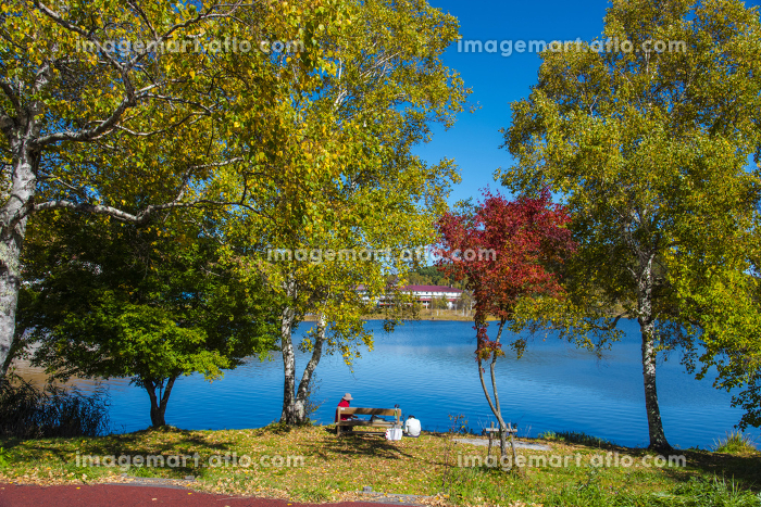 秋の白樺湖の販売画像