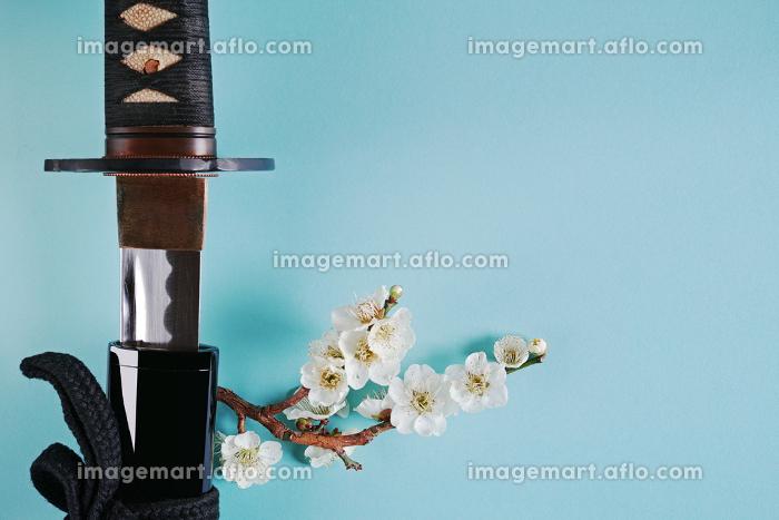 青い背景に少し抜いた日本刀と白い花が咲いた梅の枝の販売画像