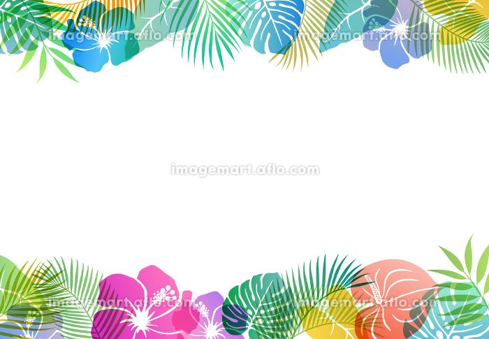 夏のトロピカルイメージ フレーム背景素材の販売画像