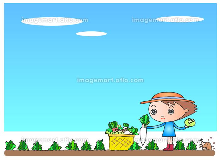 野菜の収穫の販売画像