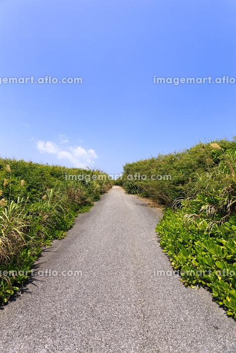 日本最南端、沖縄県波照間島の道の販売画像