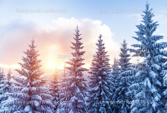 Beautiful winter forestの販売画像