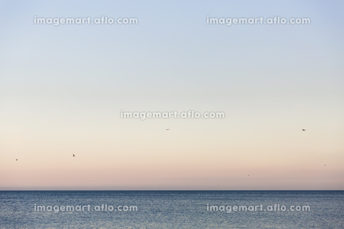 Birds flying over calm sea at sunsetの販売画像