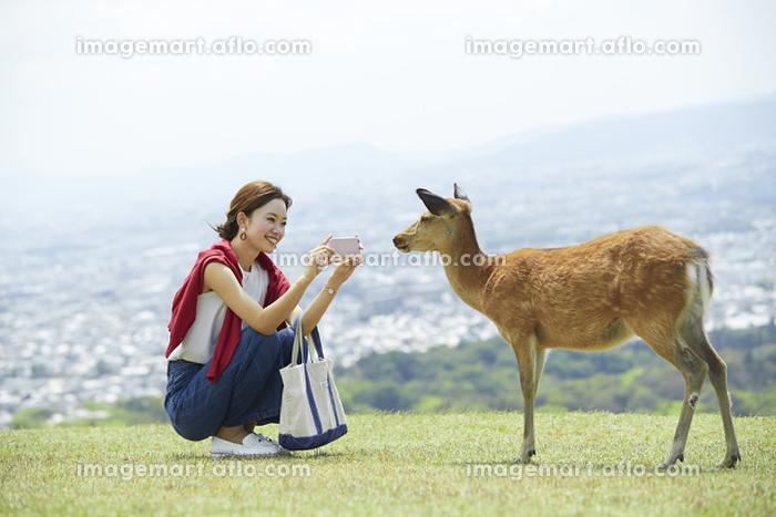 奈良公園 スマホで鹿を撮影する日本人女性の販売画像