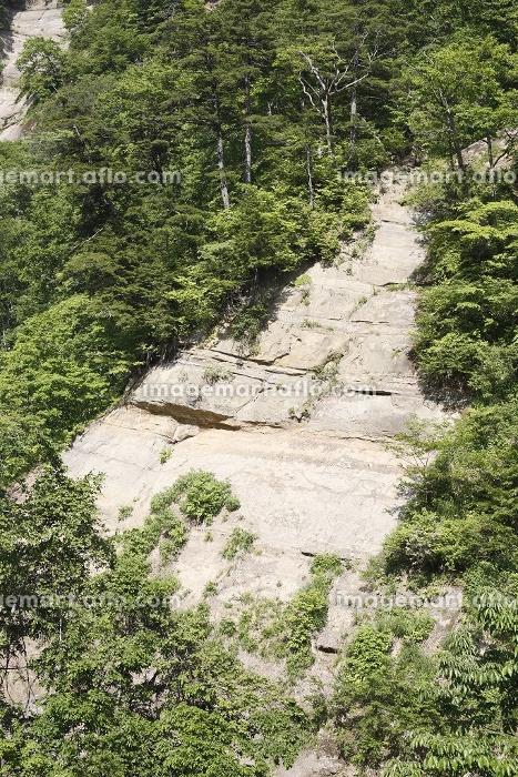 崖の緑の販売画像
