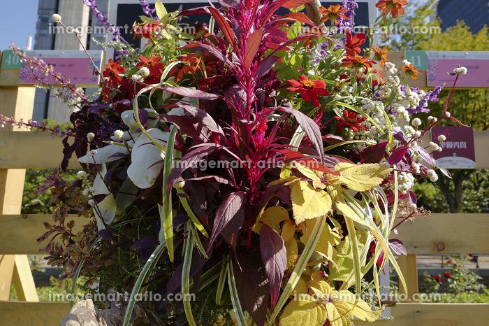 日比谷公園に飾られた花の販売画像