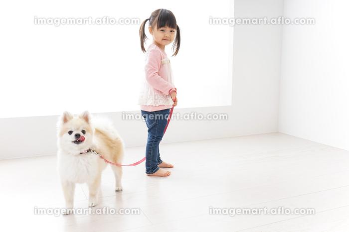 犬の散歩をする子どもの販売画像