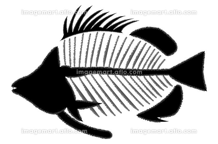 魚の骨イメージの販売画像