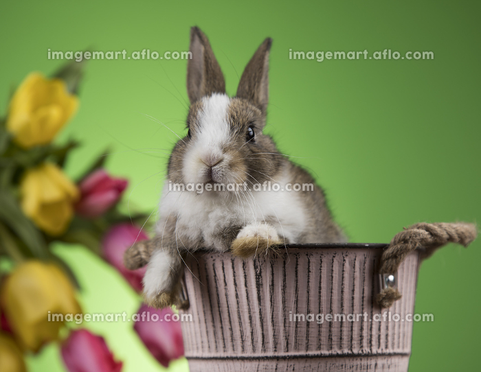Easter decoration, rabbits,eggs and flowersの販売画像