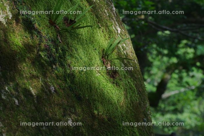 森林浴のイメージの販売画像