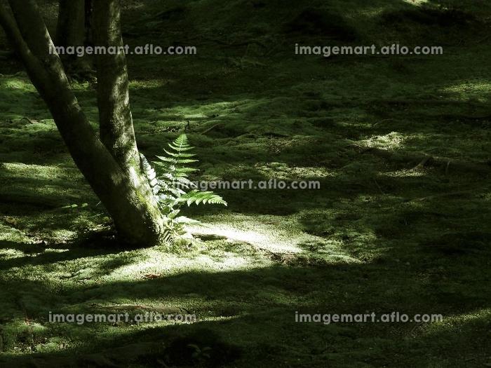 苔の生えた和風の庭の販売画像